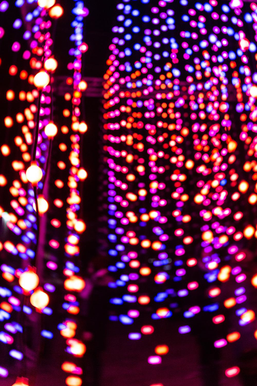 Tall-Lights